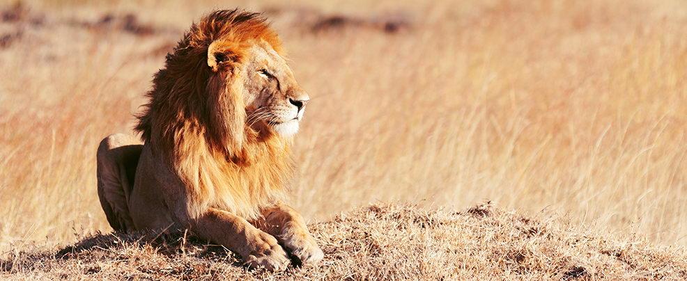 Царят на животните